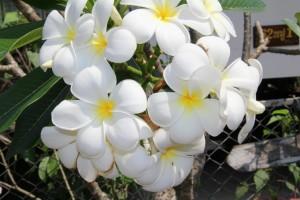Med smukke blomster